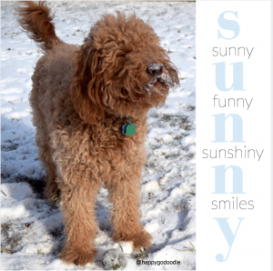 Red goldendoodle standing in snow with show on face and quote