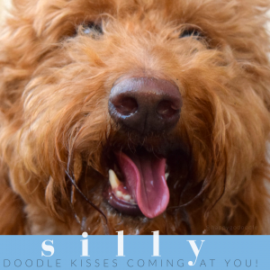Close-up red golden doodle face with tongue out and doodle kisses quote on blue background