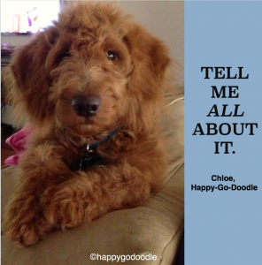 "Red goldendoodle pup with paw on couch with title ""tell me about it"" and Happy-Go-Doodle"