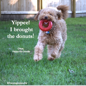 "Red goldendoodle dog running with red toy ""donut"" in mouth quote by happy-go-doodle about donuts"