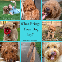 Grid photo collage of 8 activities dogs enjoy