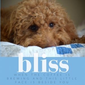 Red golden doodle's face on vintage quilt with bliss quote about coffee