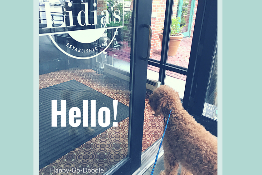 "Red goldendoodle dog looking into doorway of restaurant with word ""hello"" as she's welcomed to restaurant after winning best new pet blog"