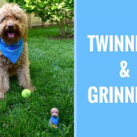 Happy-Go-Doodle, a red goldendoodle dog, sitting with a matching dog bobblehead in the green grass with type