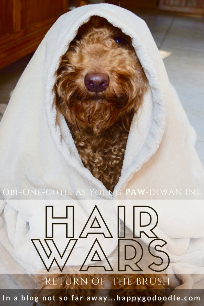 HAIR WARS a movie parody of Star Wars featuring Happy-Go-Doodle Chloe, a goldendoodle, as Obi-One-Cute, a young PAW-diwan wearing a cloak.