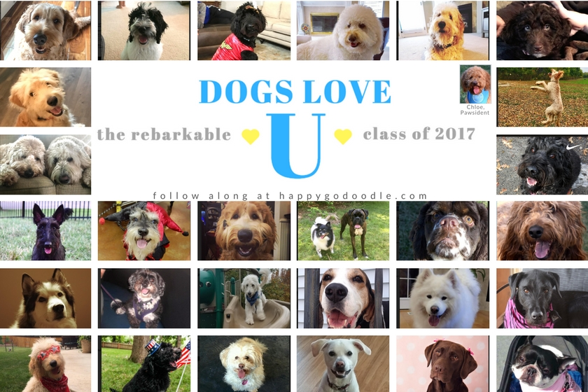 Photo collage of the Dogs Love U rebarkable class of 2017 photo contest entries and happy-go-doodle dog chloe as pawsident