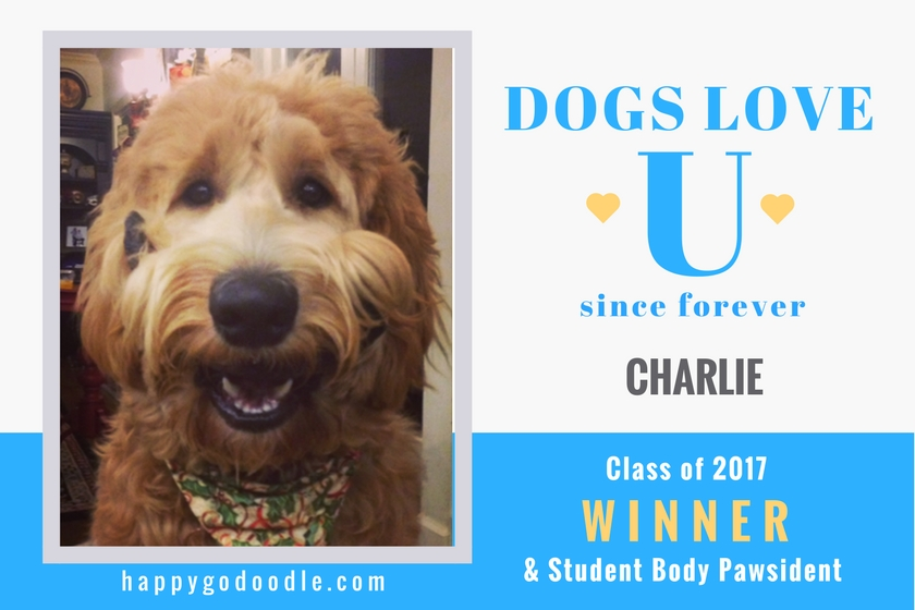 Smiley goldendoodle dog with title Dogs Love U since forever and Class of 2017 WINNER