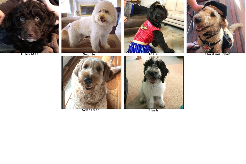 Some of the dogs who entered the first Dogs Love U Photo Contest with all pictures of all kinds of dogs composed in a yearbook style format These dogs are the rebarkable dogs in the class of 2017