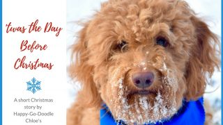 Red goldendoodle dog with snowy beard and title Twas the Day Before Christmas