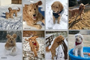 Dogs Love Winter Games Photo Contest entries for team dood and dogs are doing activities in snow