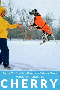 Happy-Go-Doodle's Dogs Love Winter Games Photo Contest Winner Cherry a dog leaping straight up in snow
