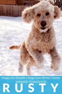 Happy-Go-Doodle's Dogs Love Winter Games Photo Contest Winner for Team Dood is Rusty a dog jumping through snow