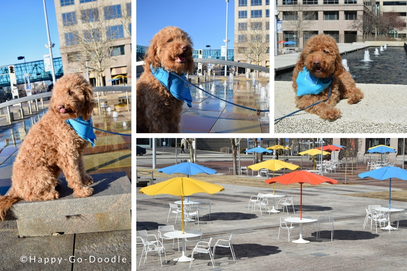 Collage of Crown Center patio area in Kansas City and goldendoodle dog