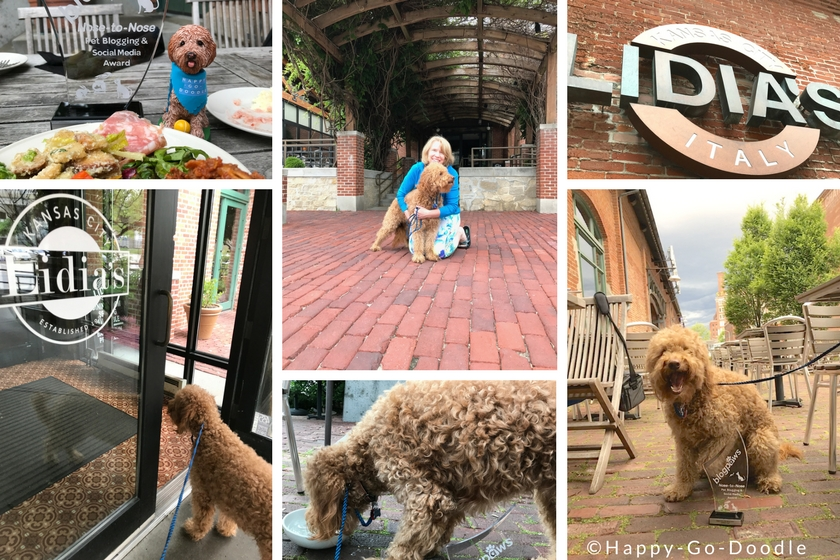 Collage of photos of dog at Dog-Friendly Restaurant in Kansas City