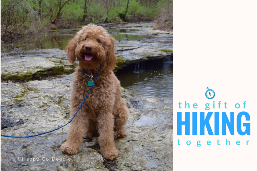red goldendoodle dog by creek and title the gift of hiking together