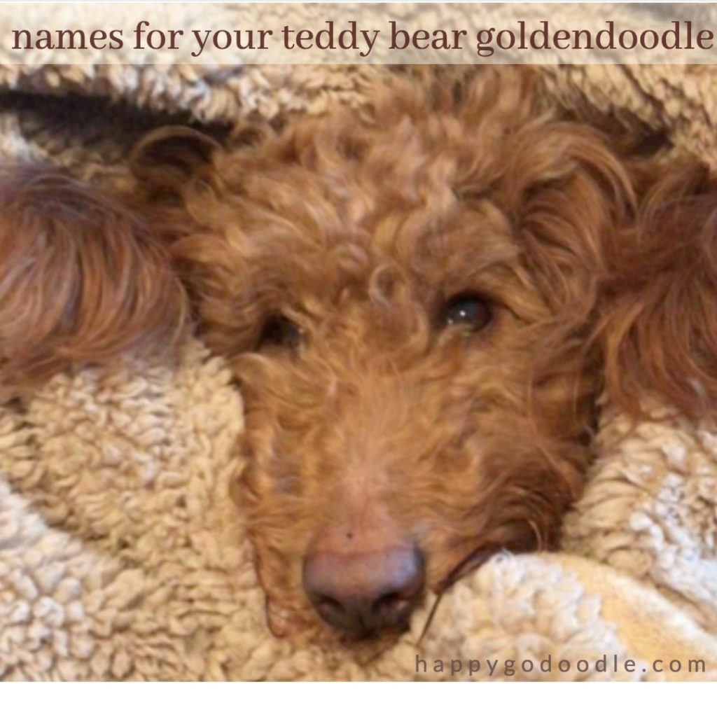 red goldendoodle dog's face snuggled in a brown fuzzy blanket and title Goldendoodle Dog Names for Your Teddy Bear Doodle