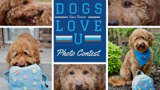 Collage of red goldendoodle dog with school backpack and title Dogs Love u Dog Photo Contest