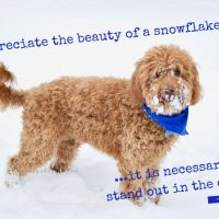 quote about winter by aristotle and photo of dog