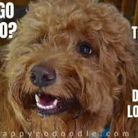 doggolingo that's mom code for love title and red goldendoodle photo