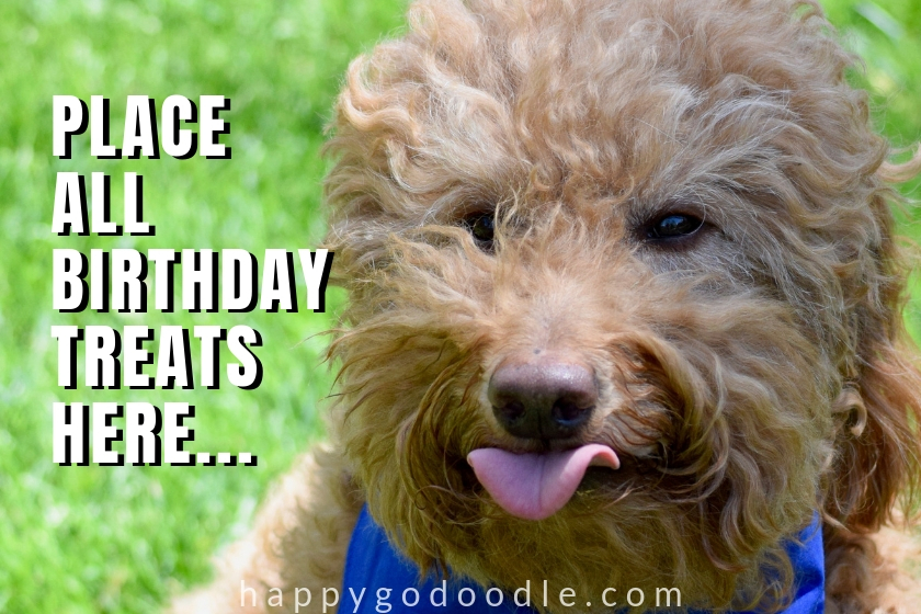 funny goldendoodle dog's face photo with birthday meme place all birthday treats here