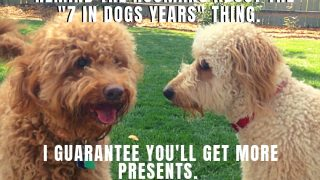 happy birthday dog meme of two dogs photo