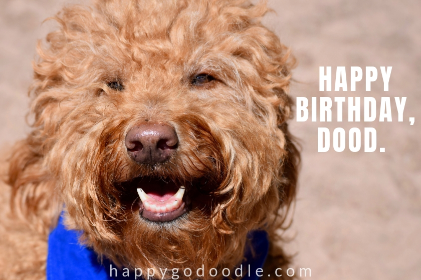 smiley dog face and title happy birthday dood happy birthday meme photo