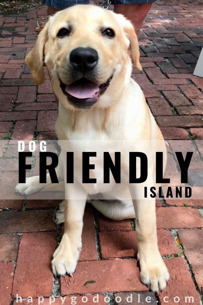 photo labrador retriever and title dog friendly amelia island