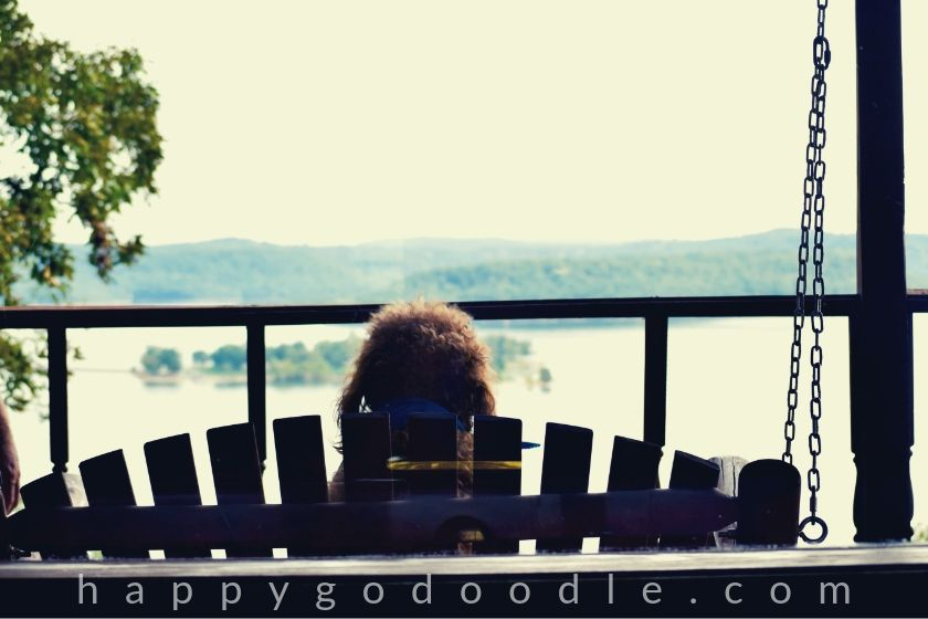 photo of dog sitting on a porch swing looking at beaver lake in arkansas