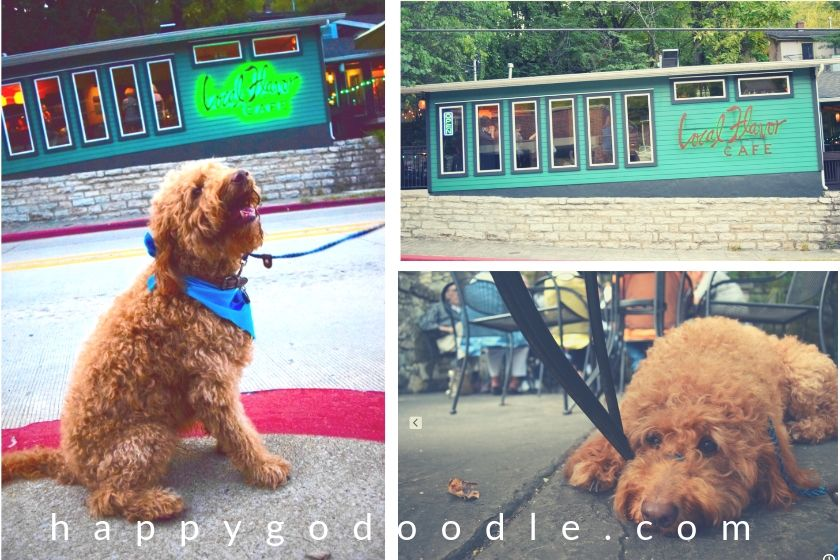 photo of red goldendoodle dog in front of dog-friendly local flavor cafe in downtown eureka springs