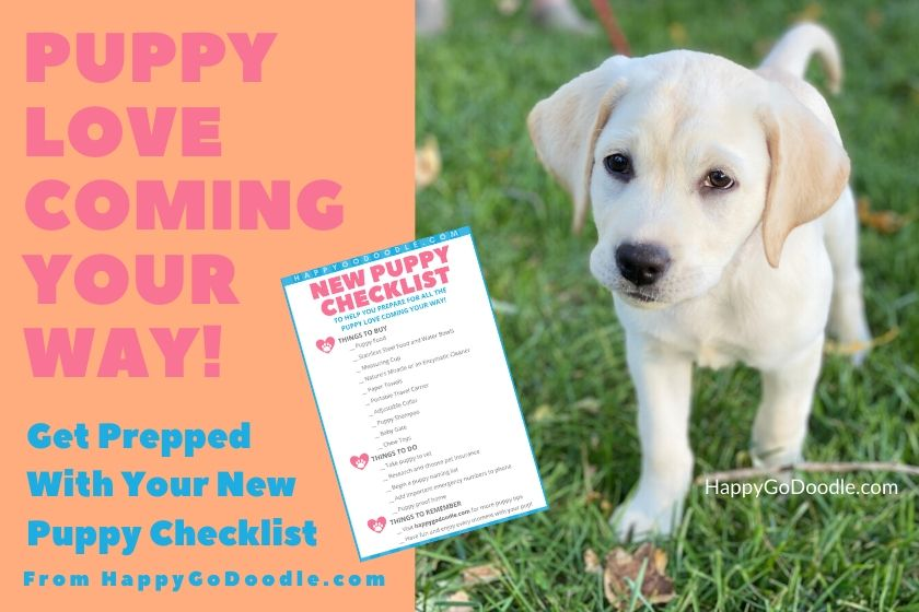 image of labrador retriever puppy walking and title get prepped with new puppy checklist printable