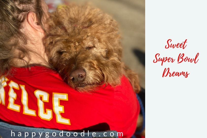 dog sleeping on owners shoulder and title sweet super bowl dreams