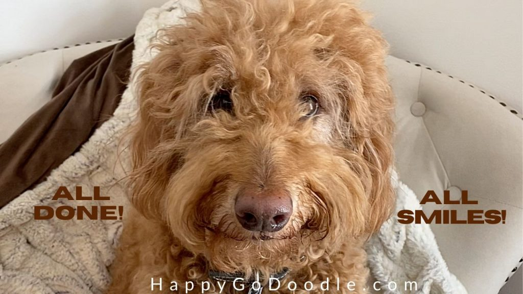 close-up of goldendoodle's face after using cornstarch to remove a dog mat and title says, all done all smiles, photo