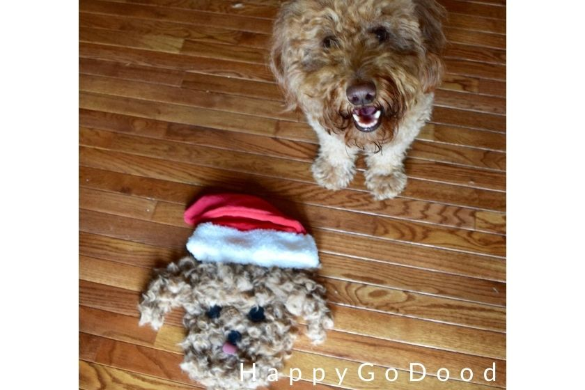 Smiling Goldendoodle next to a twinning Santa made from Goldendoodle hair clippings, photo