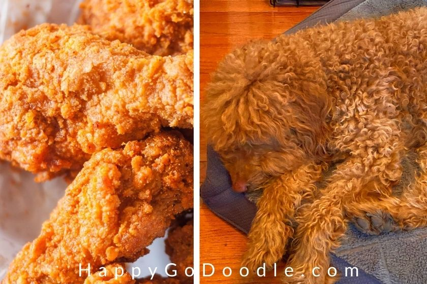 Photo of Goldendoodle dog with curly red hair that resembles friend chicken crispies next to a photo of friend chicken