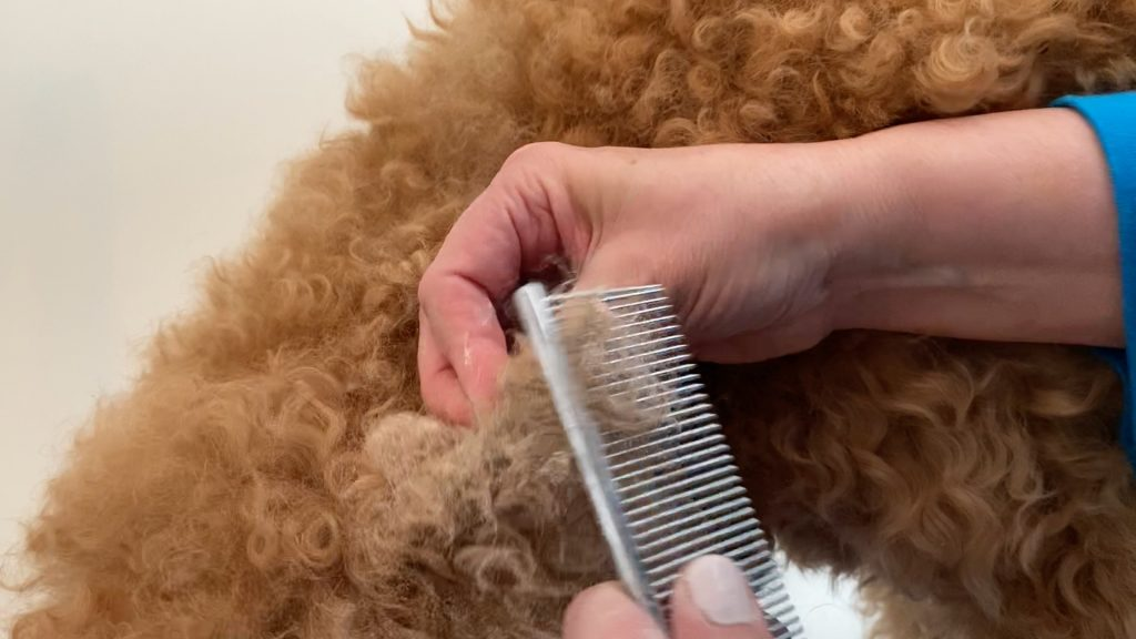 stainless steel comb running though the tips of the dog's mat after applying cornstarch, photo