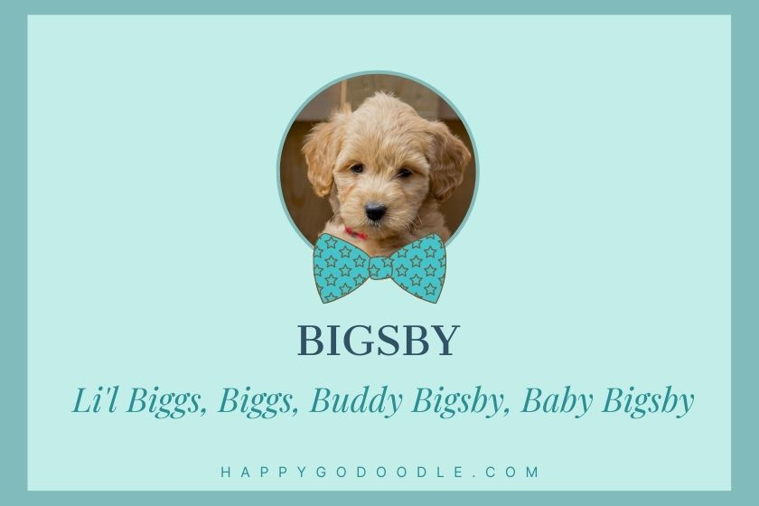 photo of tiny Goldendoodle puppy with name Bigsby and nicknames Baby Bigsby, Buddy Bigsby