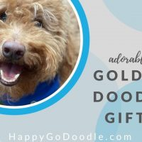 close-up of adult Goldendoodle's face and title adorable goldendoodle gifts, image
