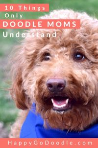 F1b Goldendoodle Face and title 10 things only doodle moms understand, photo