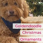 Adult Goldendoodle dog by tree and title Goldendoodle Christmas Ornaments, photo