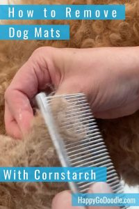 combing cornstarch through dog mat and title how to remove dog mats with cornstarch, photo