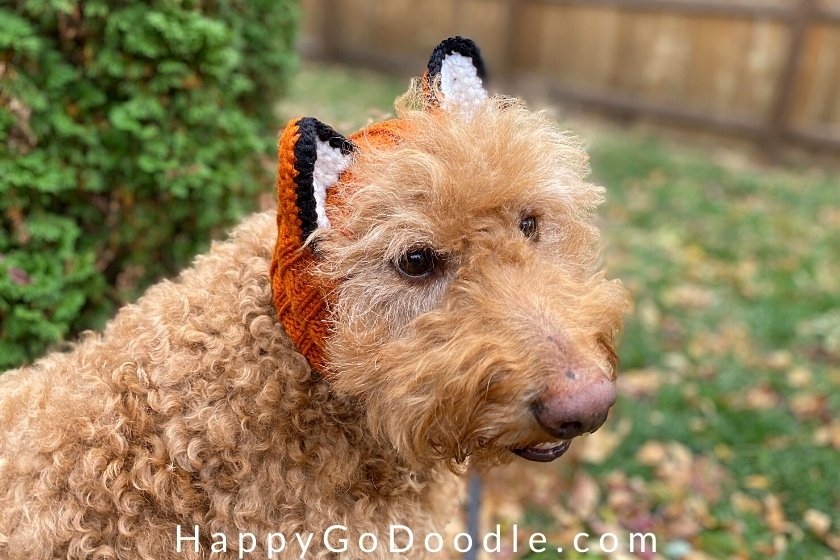 Side view of a red Goldendoodle wearing a dog snood that looks like  a fox, photo