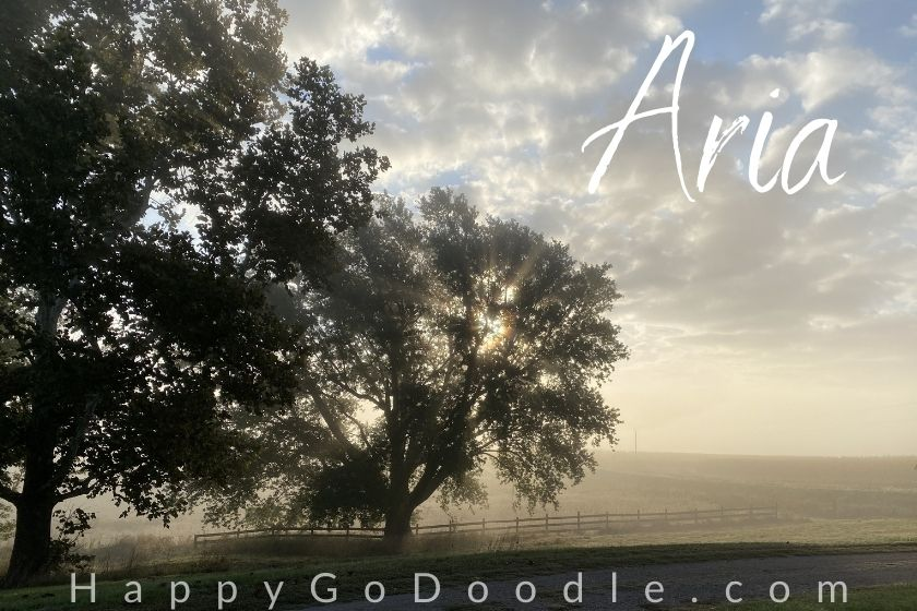 "two beautiful trees on a foggy morning in the country and the word ""Aria"" which means Air, as a nature dog name, photo"