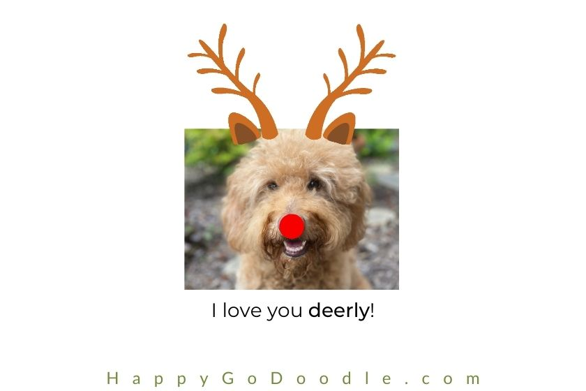 dog with reindeer antlers and red nose like Rudolph, photo