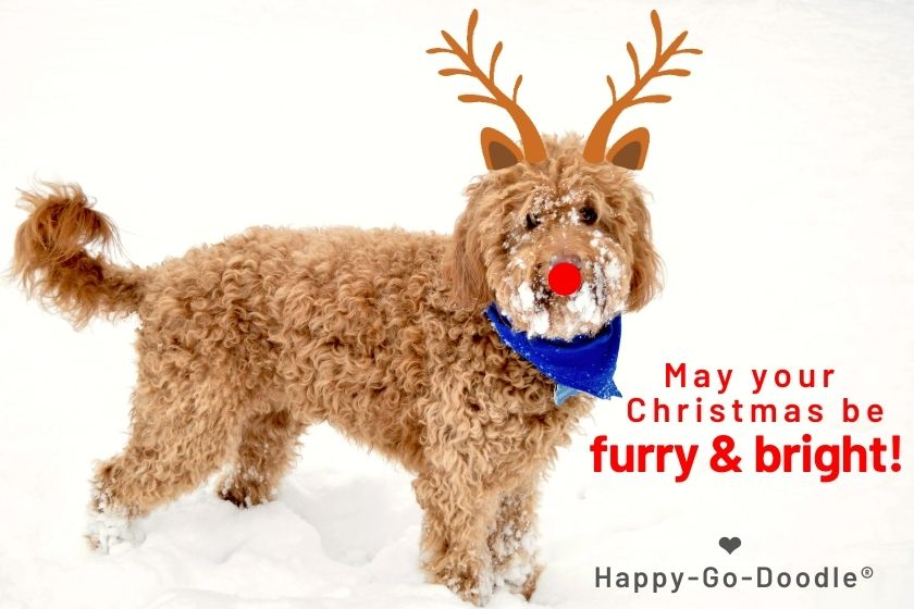 Dog standing in snow with reindeer antlers and red nose and title May Your Christmas be furry & bright! photo