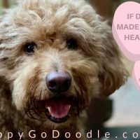 Red Goldendoodle dog looking happy and title
