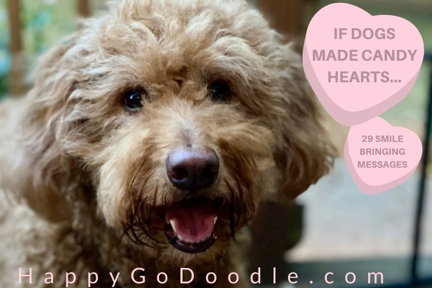Red Goldendoodle's face and message in heart shapes: If Dogs Made Candy Hearts, smile-bringing messages, photo
