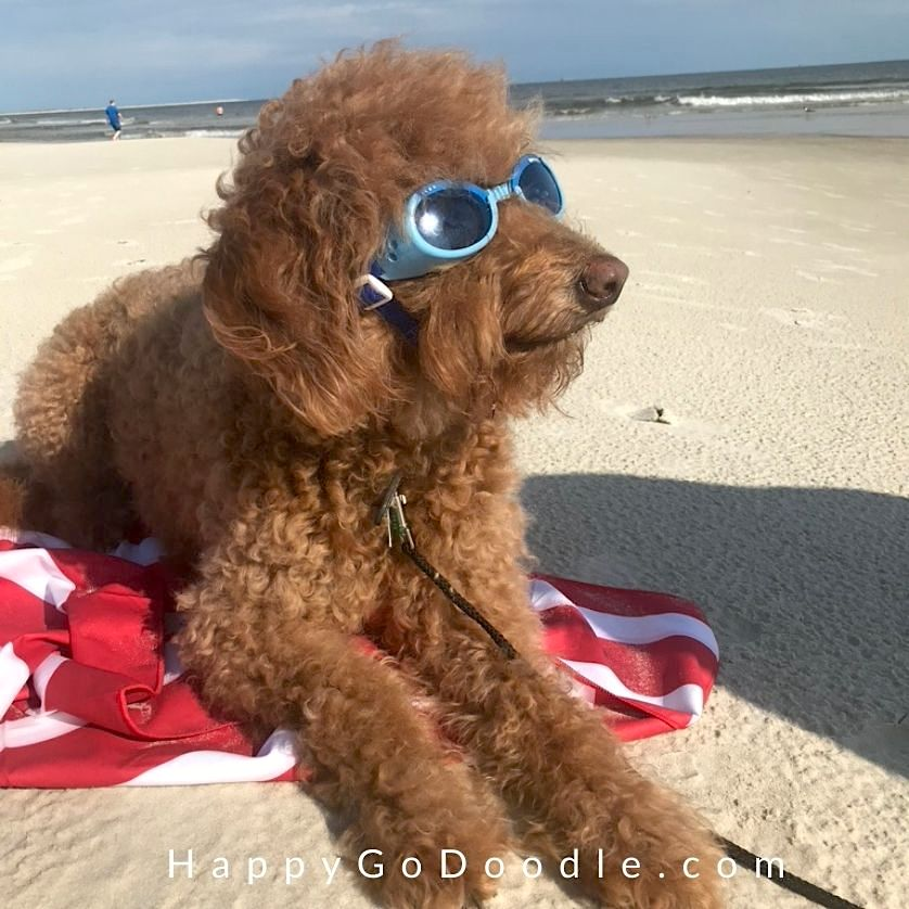 Red Goldendoodle dog lying on a beach towel and wearing blue dog goggles by the ocean, photo