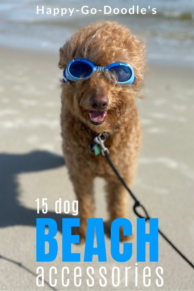 Medium sized Goldendoodle wearing blue doggle dog goggles on beach and title 15 dog beach accessories, photo