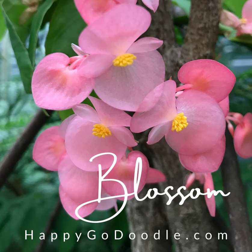 Pink flowers with the word Blossom in script, photo