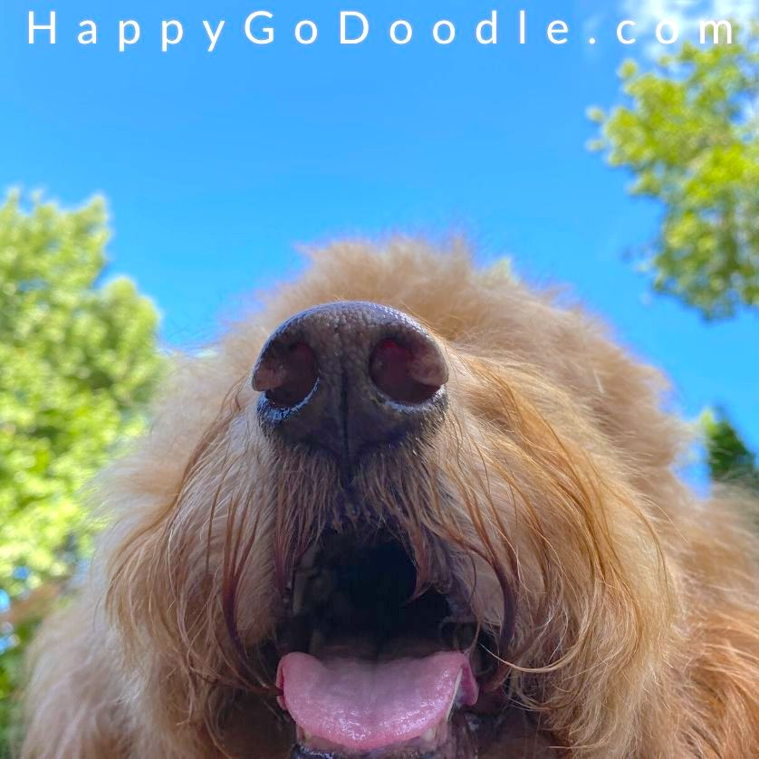 Close up of dog's nose sniffing and blue sky, photo